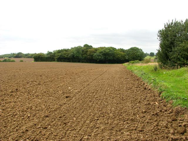 Path to Grove Wood, Stradbroke
