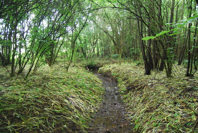Small stream in Birling Ashes