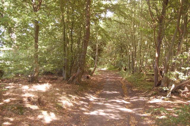 The Essex Way 158: Copperas Wood