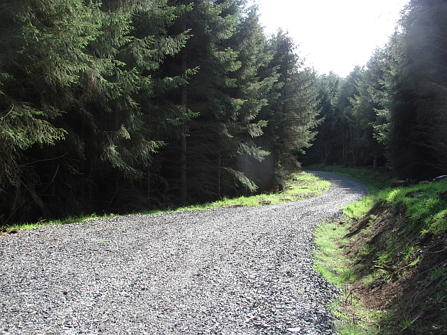 New road surface, Benarty Wood