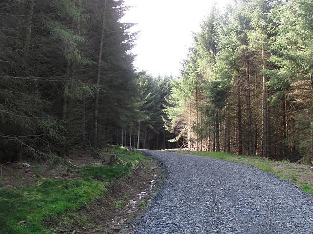 Logging road, Benarty Wood