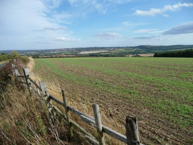 Fenced field of winter wheat