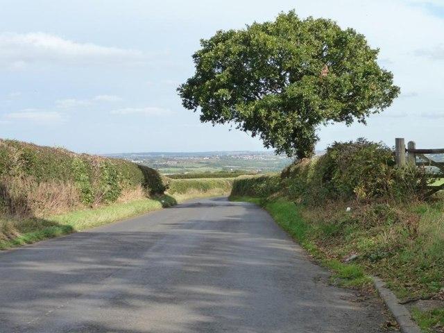 Tree on Upper Field Lane