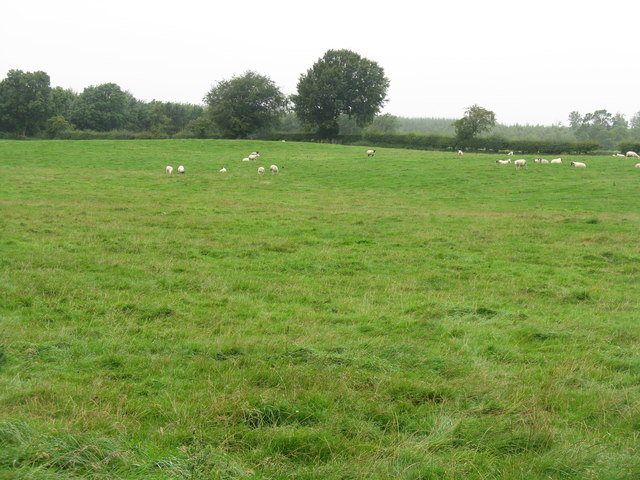 Sheep near Outerston