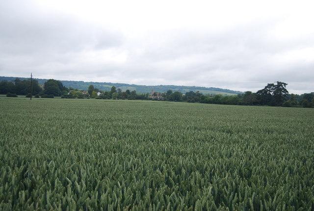 Large wheat field near Birling