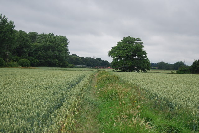 Ditch and earthbank in a wheat field