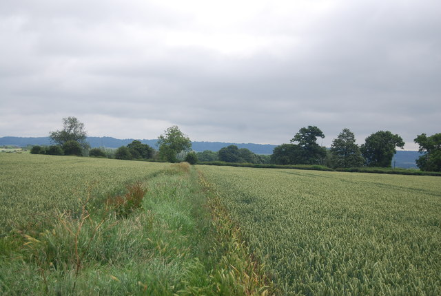 Ditch and earthbank in a wheat field near Birling