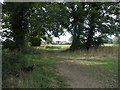 SE4417 : Footpath between the trees at the rear of Ackworth House by Bill Henderson