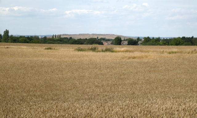 Wheatfield southeast of Meriden