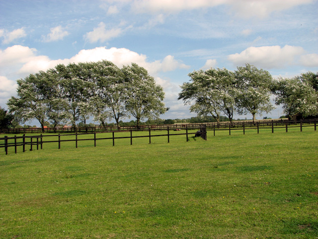 Paddocks east of Brown's Lane, Holme Hale