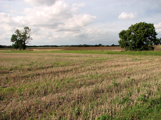Field boundary west of Brown's Lane, Holme Hale