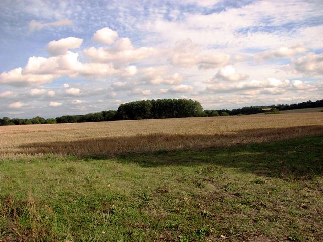 Stubble field, Holme Hale