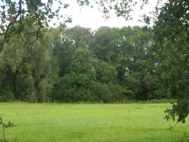 Farmland and woodland off the A19