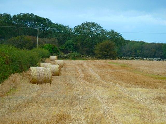 Half a Harvest
