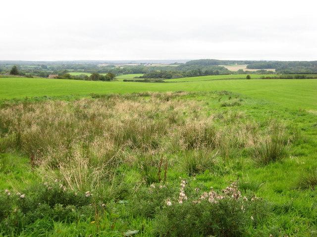 Fields near Little Scaling Farm