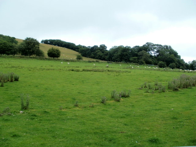 Sheep grazing near Nantmadog Farm