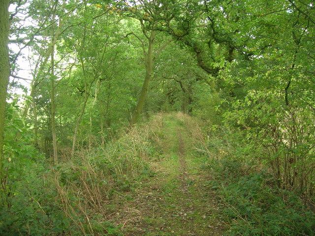 South Ings Lane (footpath)