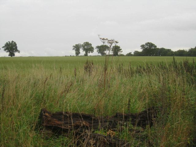 Farmland south of Steventon