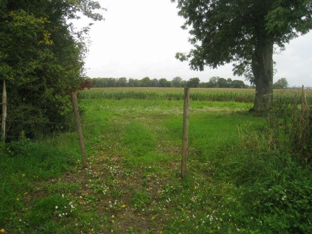 Easy field access