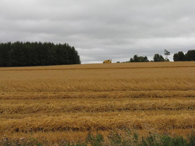 Damp harvest