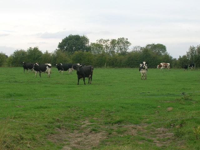 Grazing land off Fenwick Lane