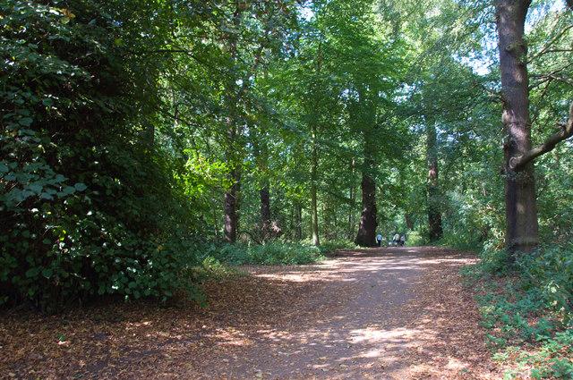 Woodland path - Clumber Park