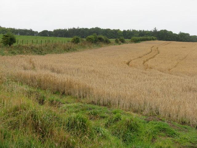 Farmland near North Middleton