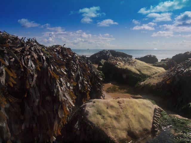 Barafundle Rocks