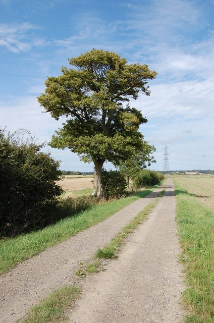 Tree by Footpath to Rother Levels