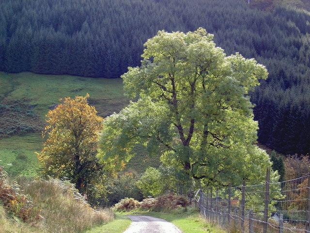 Early autumn in Glen Gloy