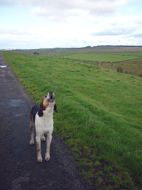 A hound howling in the wilderness