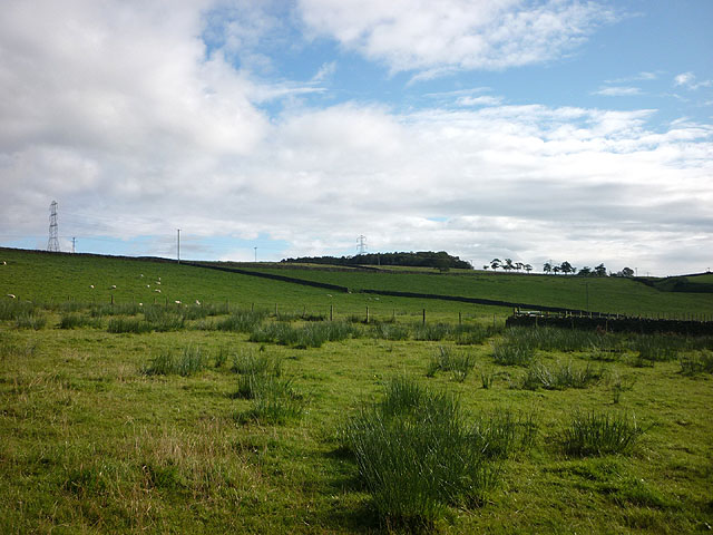 Rough pasture by Jock's Hill above Haltwhistle