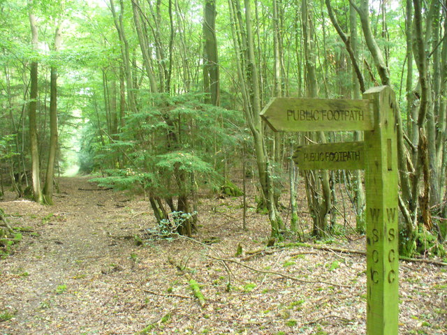 Footpath Through Hog Wood
