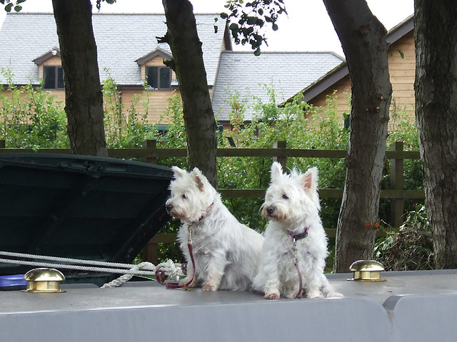 Narrowboat guard dogs near Great Haywood, Staffordshire