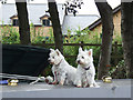 SJ9923 : Narrowboat guard dogs near Great Haywood, Staffordshire by Roger  Kidd