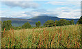 NJ4600 : Looking towards Morven by Anne Burgess