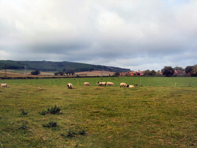Sheep in Gote Farm