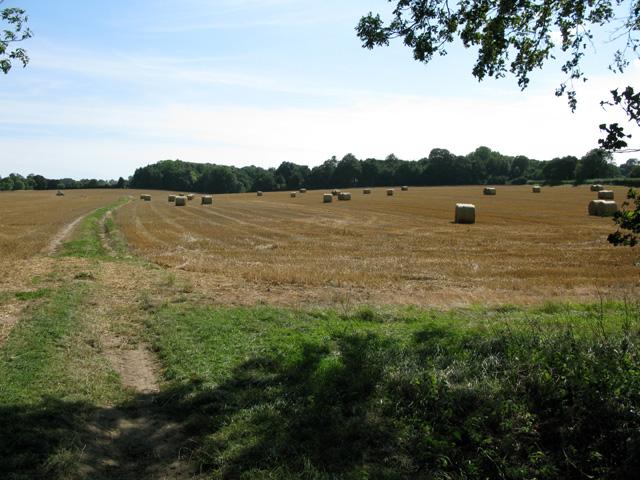 Straw bales on North Court farmland