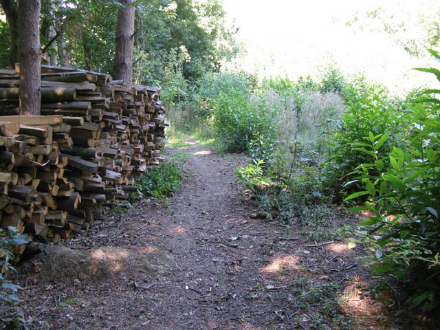 Bridleway through woods near Tilmanstone