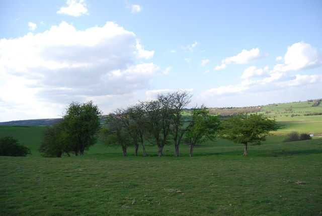 Trees near Icklesham