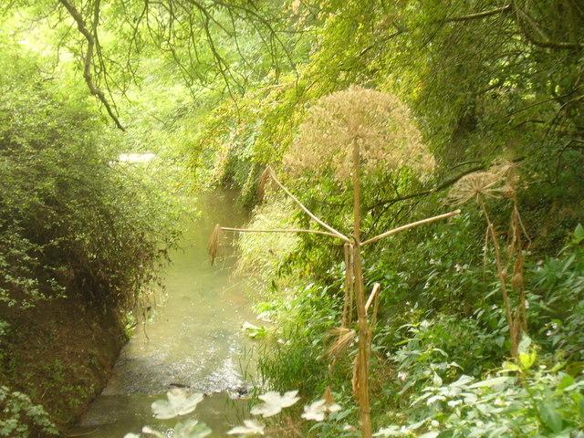 River Arun by Loxwoodhills Lake