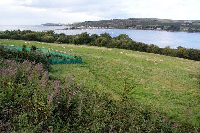 Sheep field above the Teifi estuary