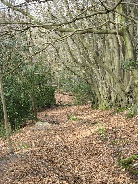 Bridleway south of Creedhole Farm