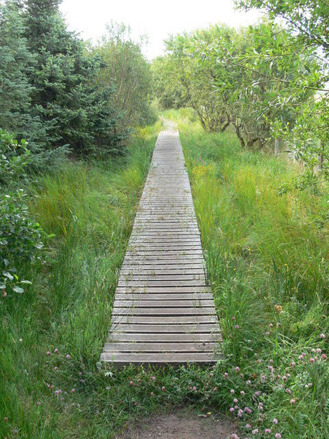 Boardwalk in Newborough Forest