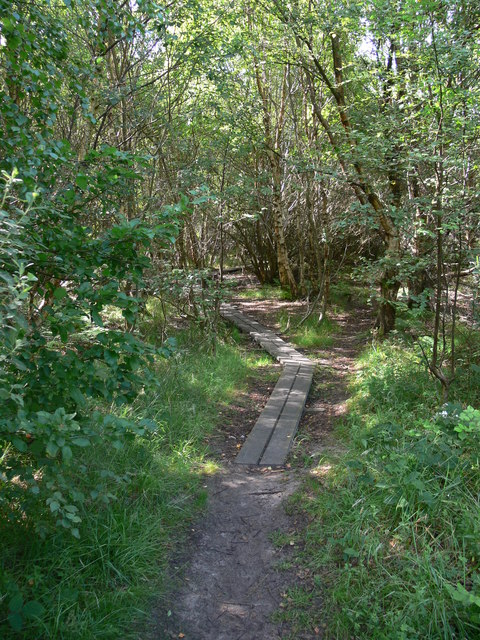 Footpath in Newborough Forest
