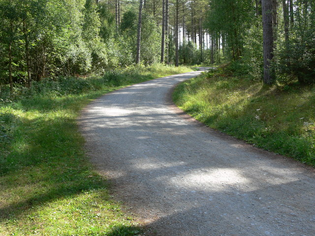 Track through Newborough Forest