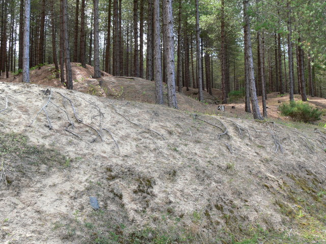 Corsican pines and sand dunes