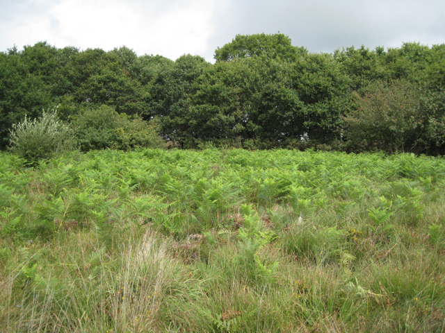 Bracken advancing, Chudleigh Knighton Heath