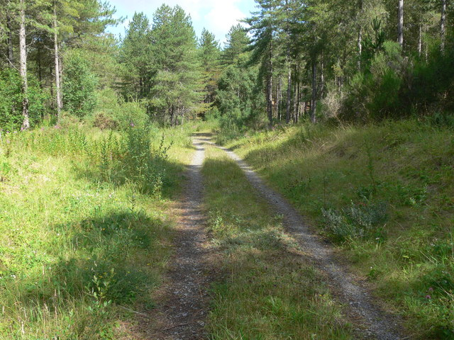 Track through Newborough Forest
