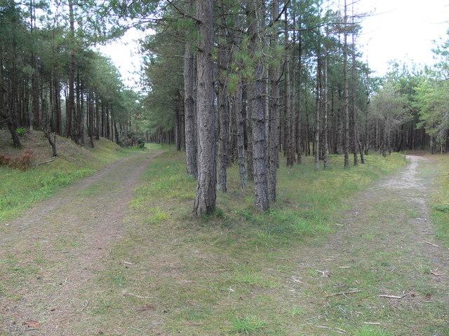 Tracks through Newborough Forest